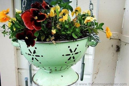 Colander as a planter