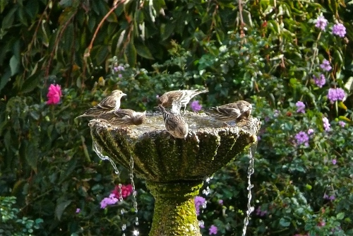 bird bath photo