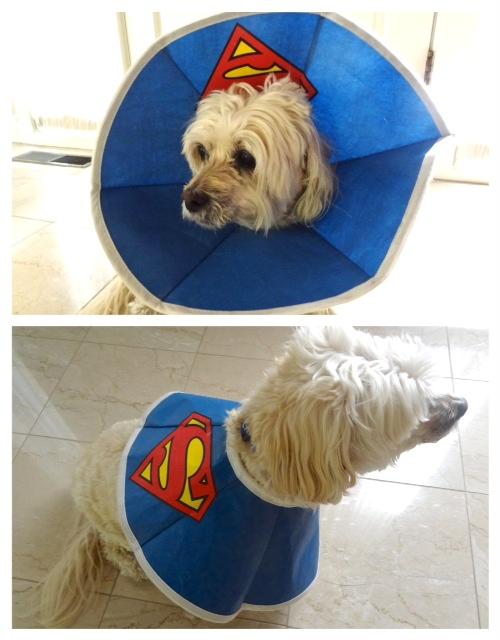 Superman Romeo