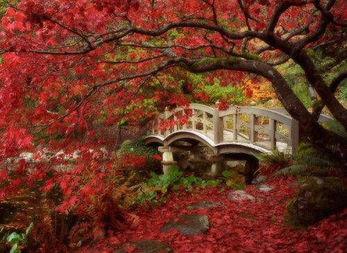Japanese Garden at Royal Roads University in British Columbia