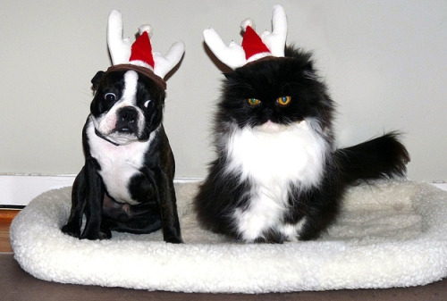 11 Differences Between Cats and Dogs During the Holidays