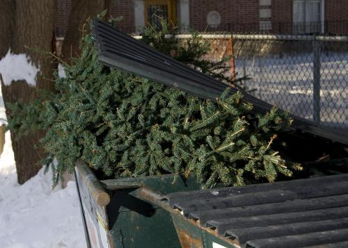10 Uses for Your Dead Christmas Tree