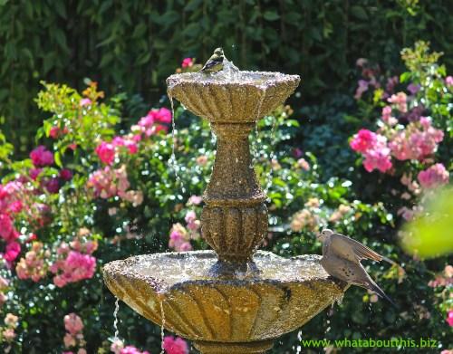 Bird Bath Image