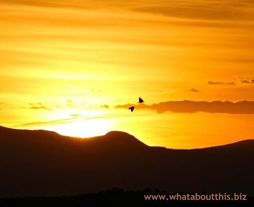 Birds Flying High: Santa Fe Sunset