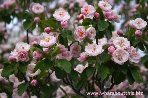Santa Fe Blossoms