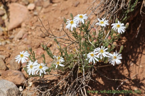 Ghost Ranch Flowers