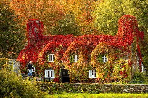 12 Before-And-After Photos of Autumn's Beautiful Transformations