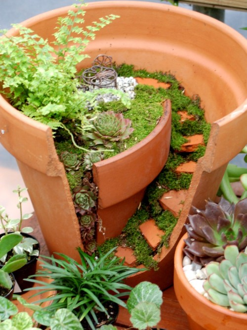 Miniature and Fairy Gardening