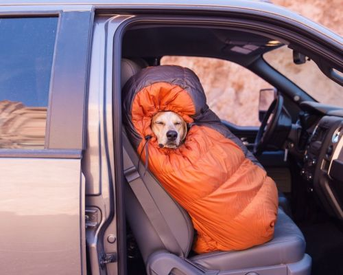 Maddie the Traveling Dog