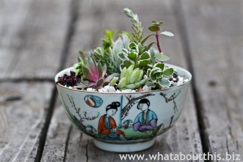 Planting Succulents in Vintage China